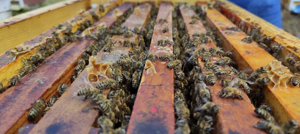 Havalar soğudu, Bursa da arıcılar propolis üretmeye başladı #4