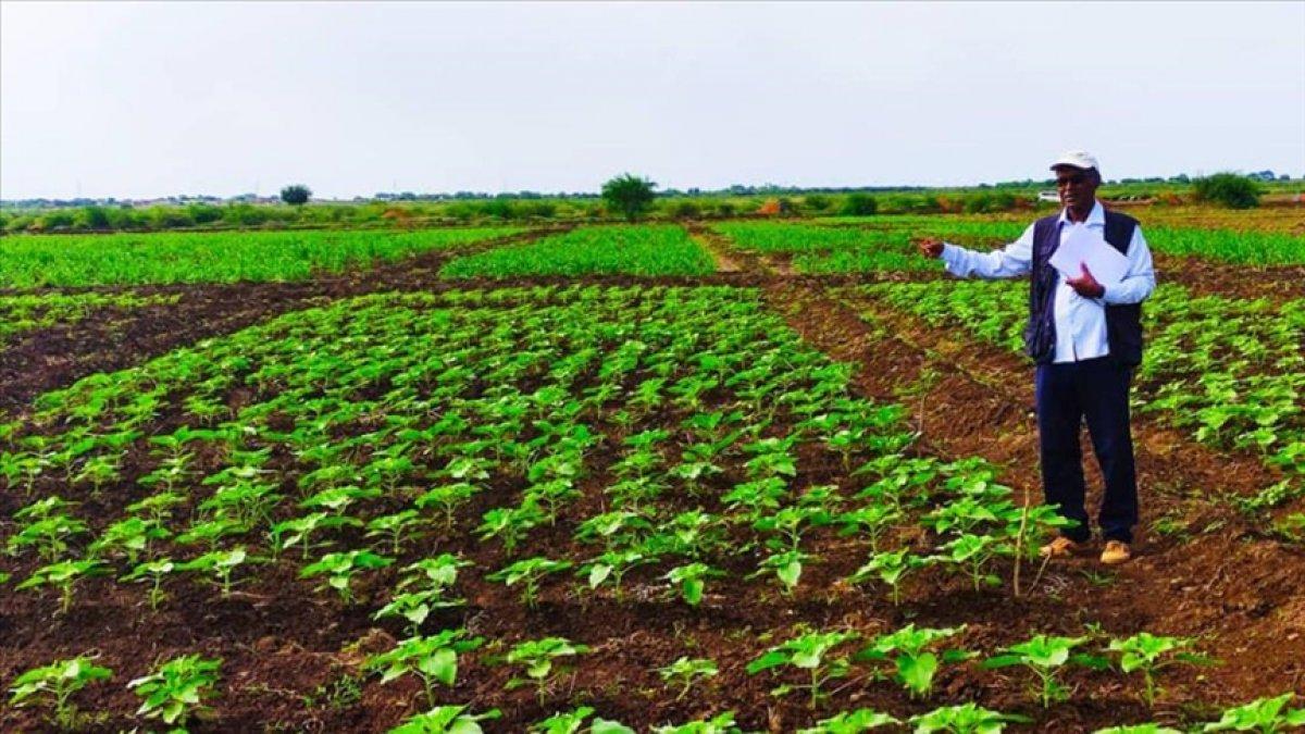 Türk tohumu Sudan da üretilecek #2
