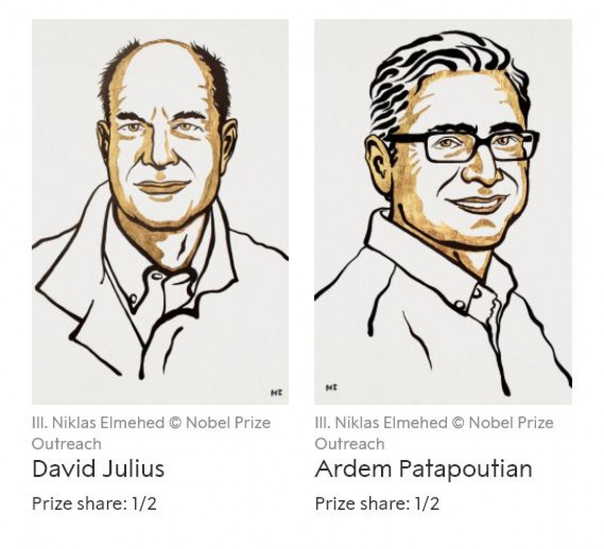 2021 Nobel Tıp Ödülü sahibini buldu #1