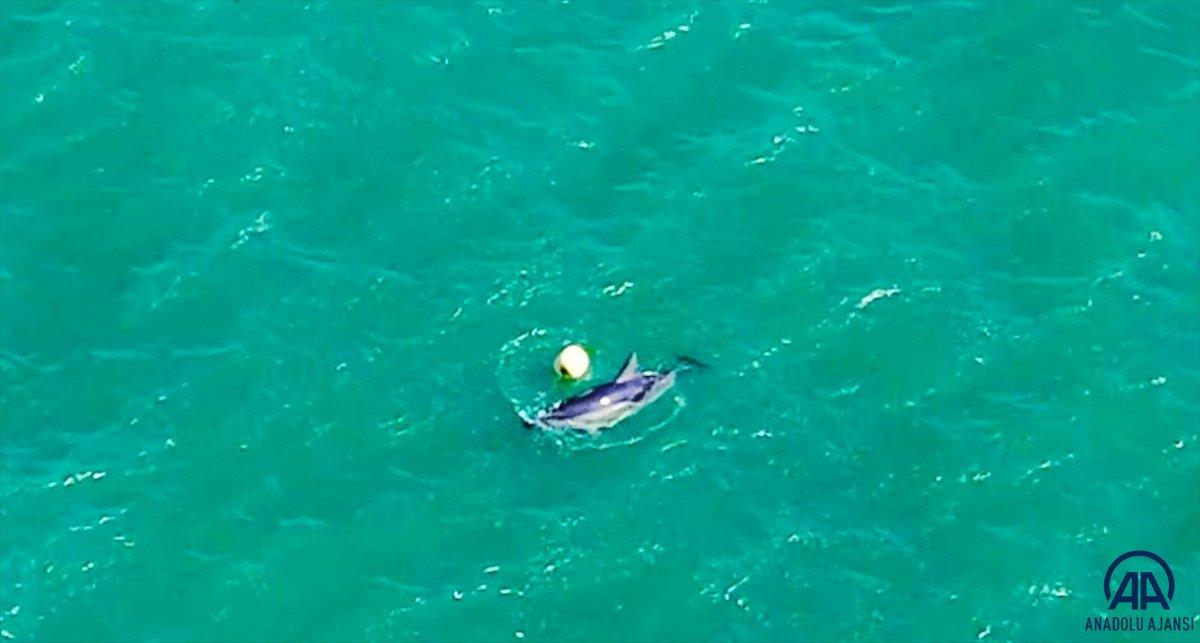 Balıkesir de yunusun şamandırayla oyunu drone ile görüntülendi #3
