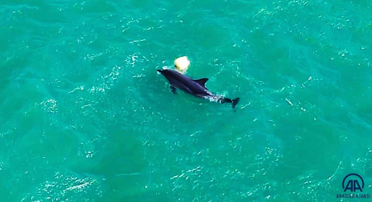 Balıkesir de yunusun şamandırayla oyunu drone ile görüntülendi #5