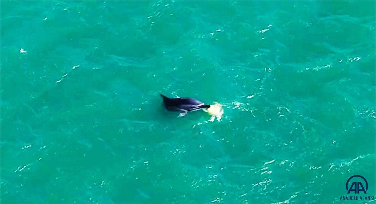 Balıkesir de yunusun şamandırayla oyunu drone ile görüntülendi #4