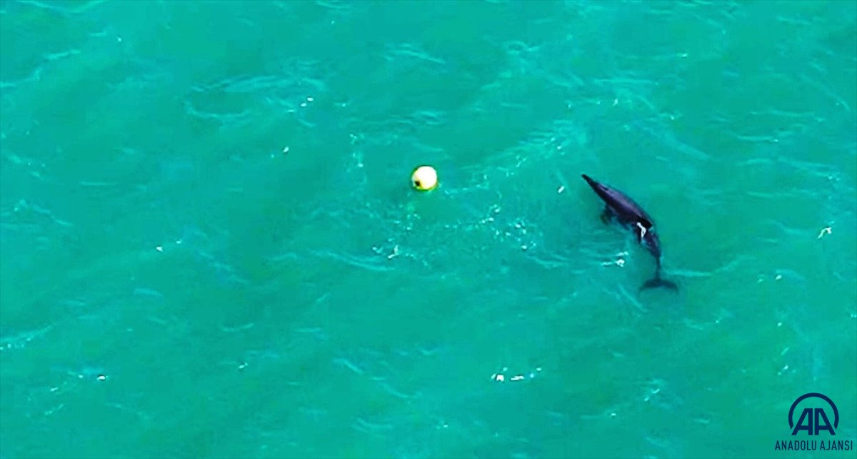 Balıkesir de yunusun şamandırayla oyunu drone ile görüntülendi #2