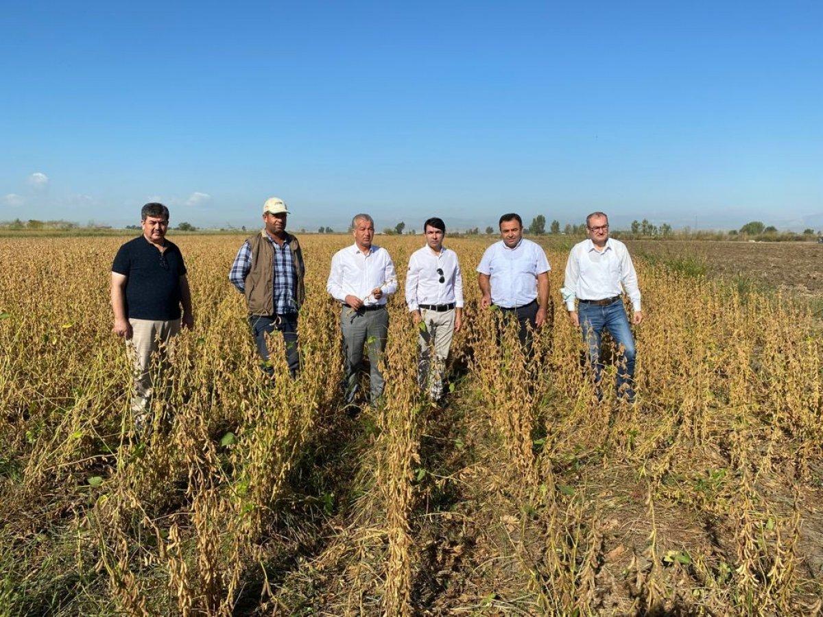 Tarsus'ta yerli soya çeşidi Samsoy'un hasadı yapıldı #1