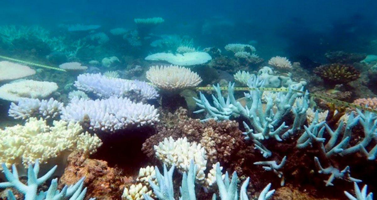 Dünya genelinde mercan resifinin yüzde 14 ü yok oldu #2