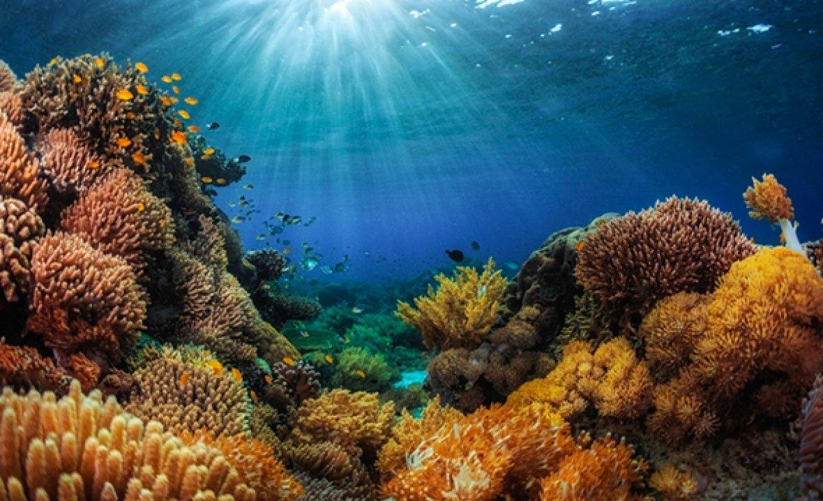 Dünya genelinde mercan resifinin yüzde 14 ü yok oldu #4