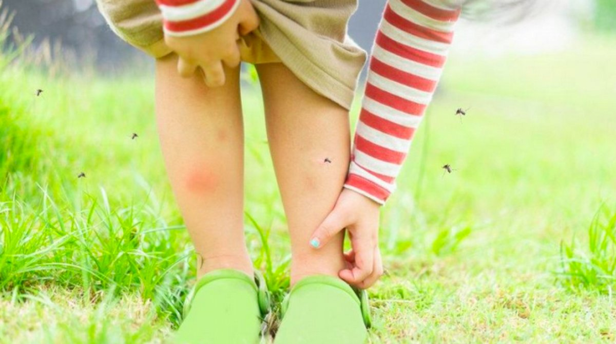 DSÖ, sıtma aşısını onayladı #3