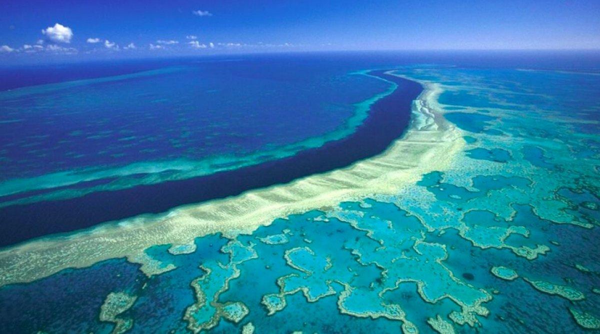 Dünya genelinde mercan resifinin yüzde 14 ü yok oldu #3