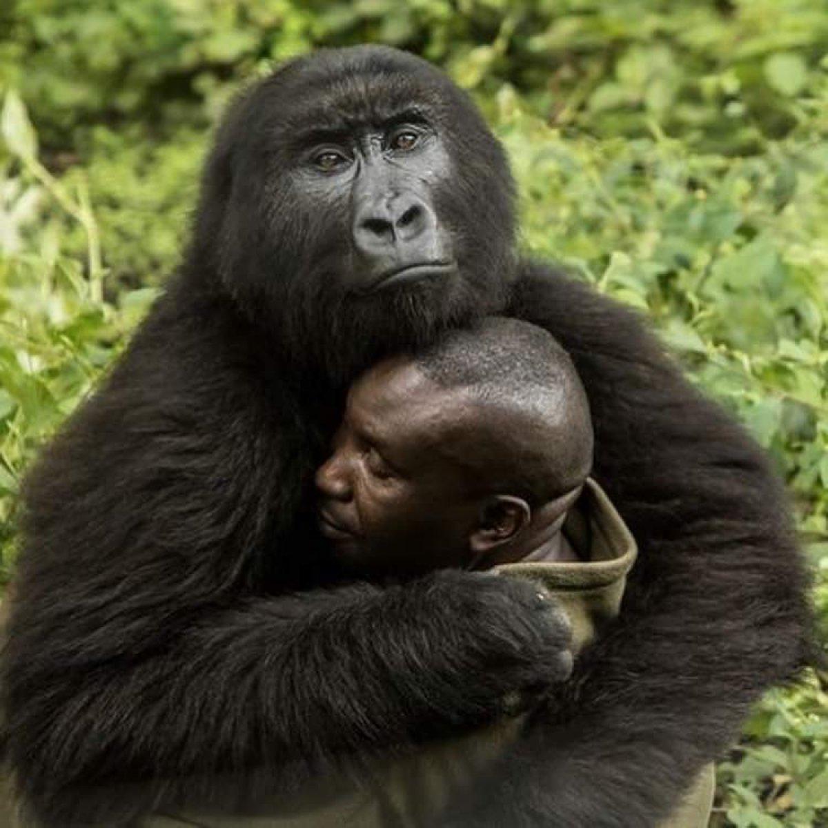 Bakıcısıyla çektirdiği selfie yle tanınan Ndakasi hayatını kaybetti #3