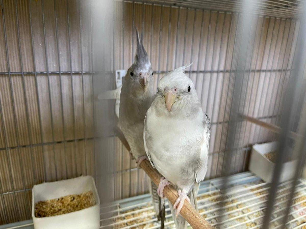 Güngören de canlı hayvan kaçakçılarına baskın: 45 papağan kurtarıldı #1