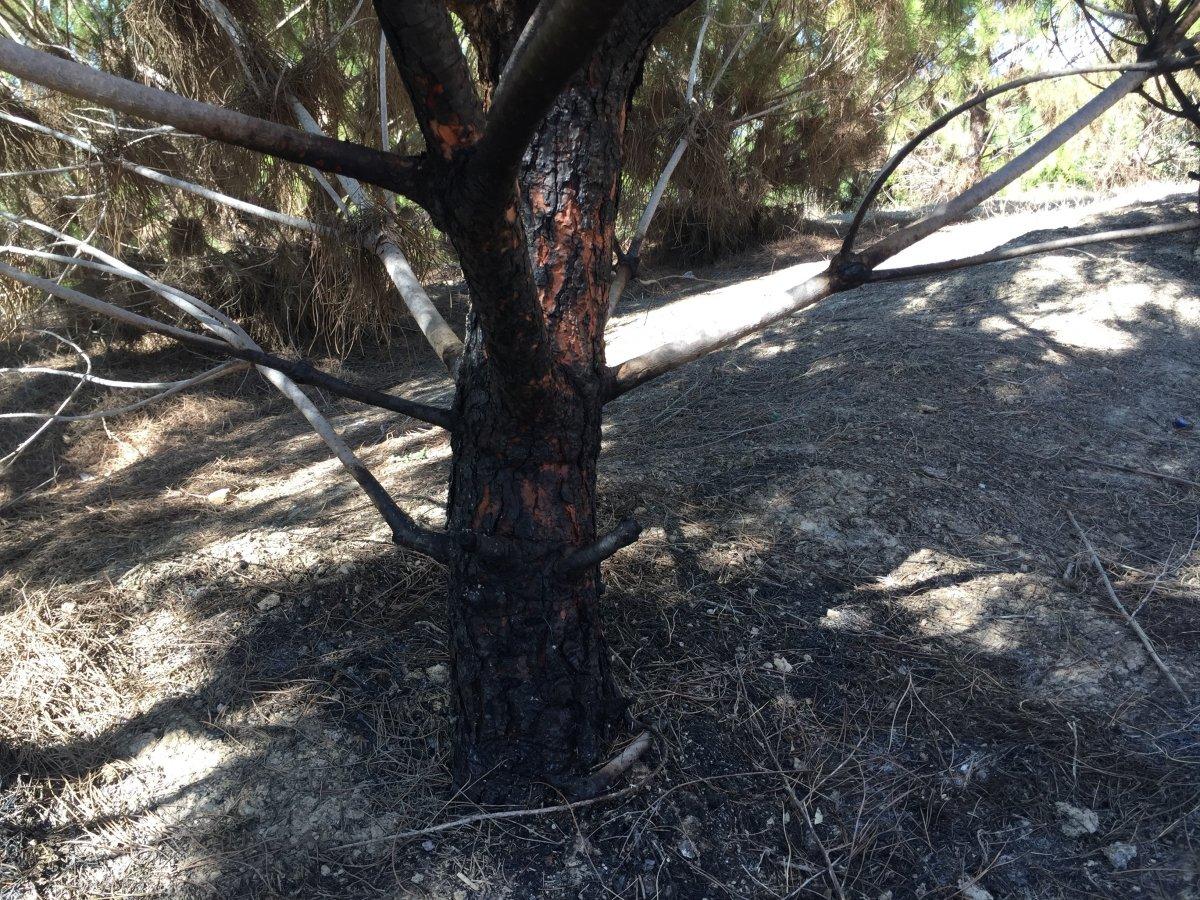 Adana'da şehitler ormanını yakan zanlı, yangın çıkartırken yakalandı #6