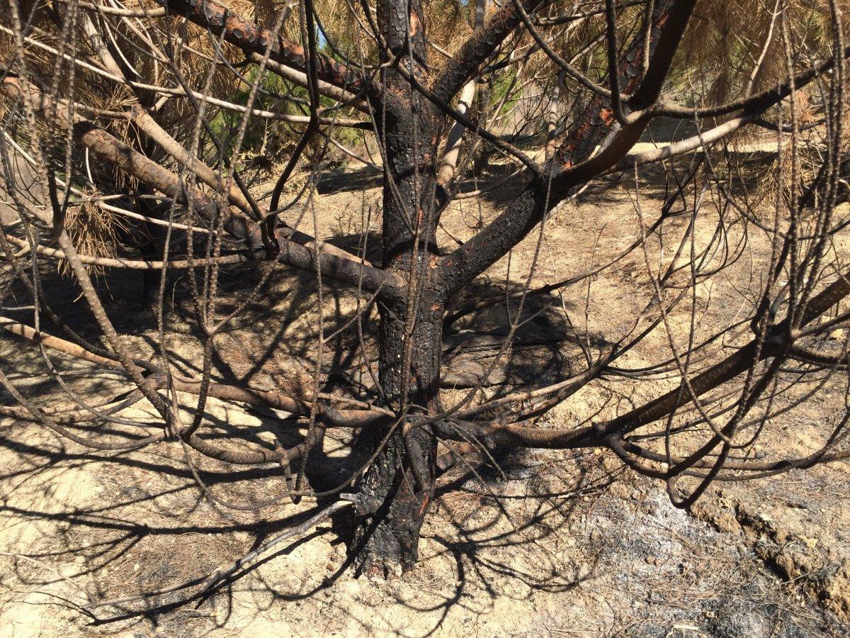 Adana'da şehitler ormanını yakan zanlı, yangın çıkartırken yakalandı #7