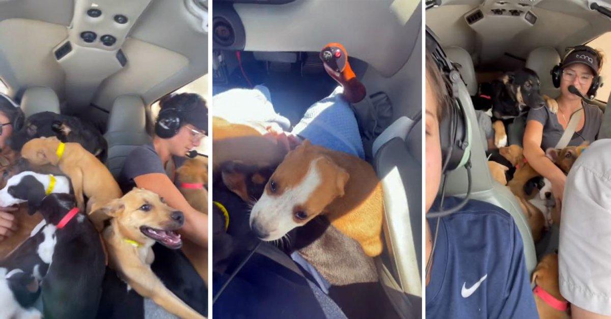 ABD de uçakla köpekleri kurtarma operasyonu #1