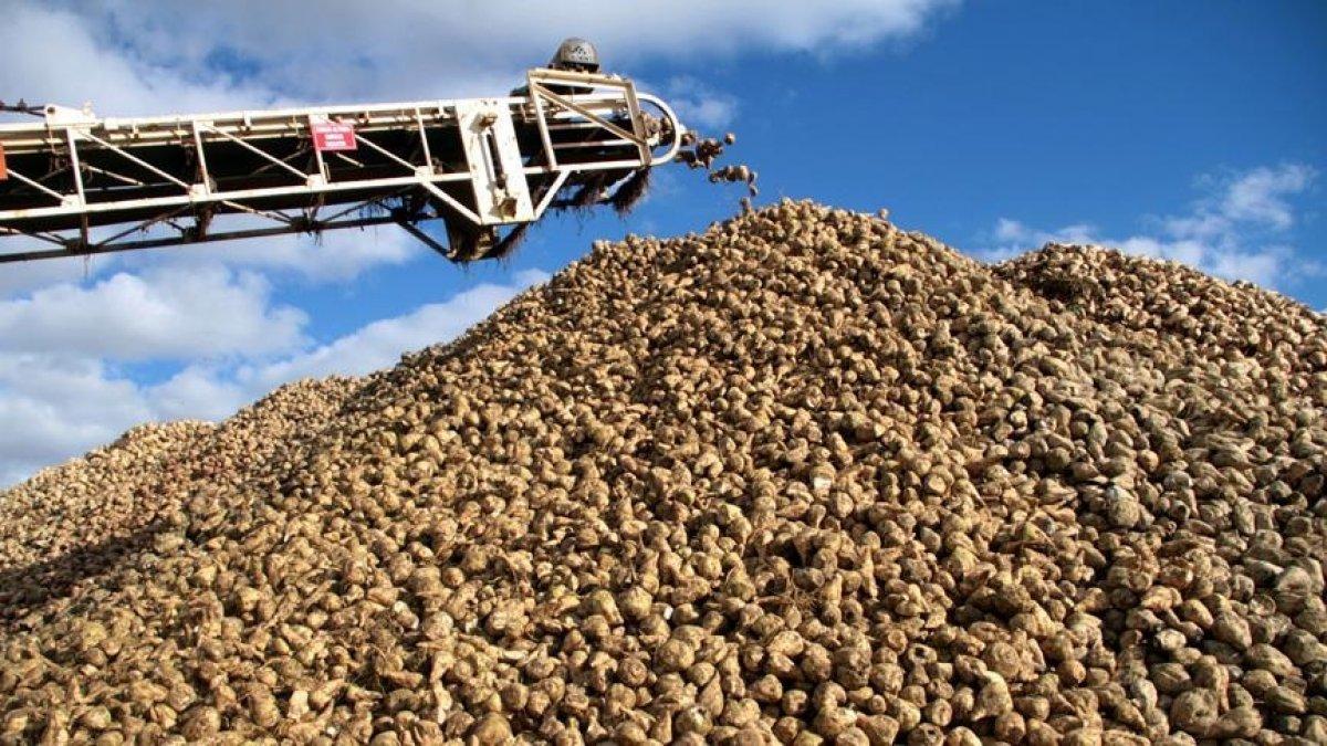 Türkşeker yeni sezonda 100 bin ton şeker üretti #1