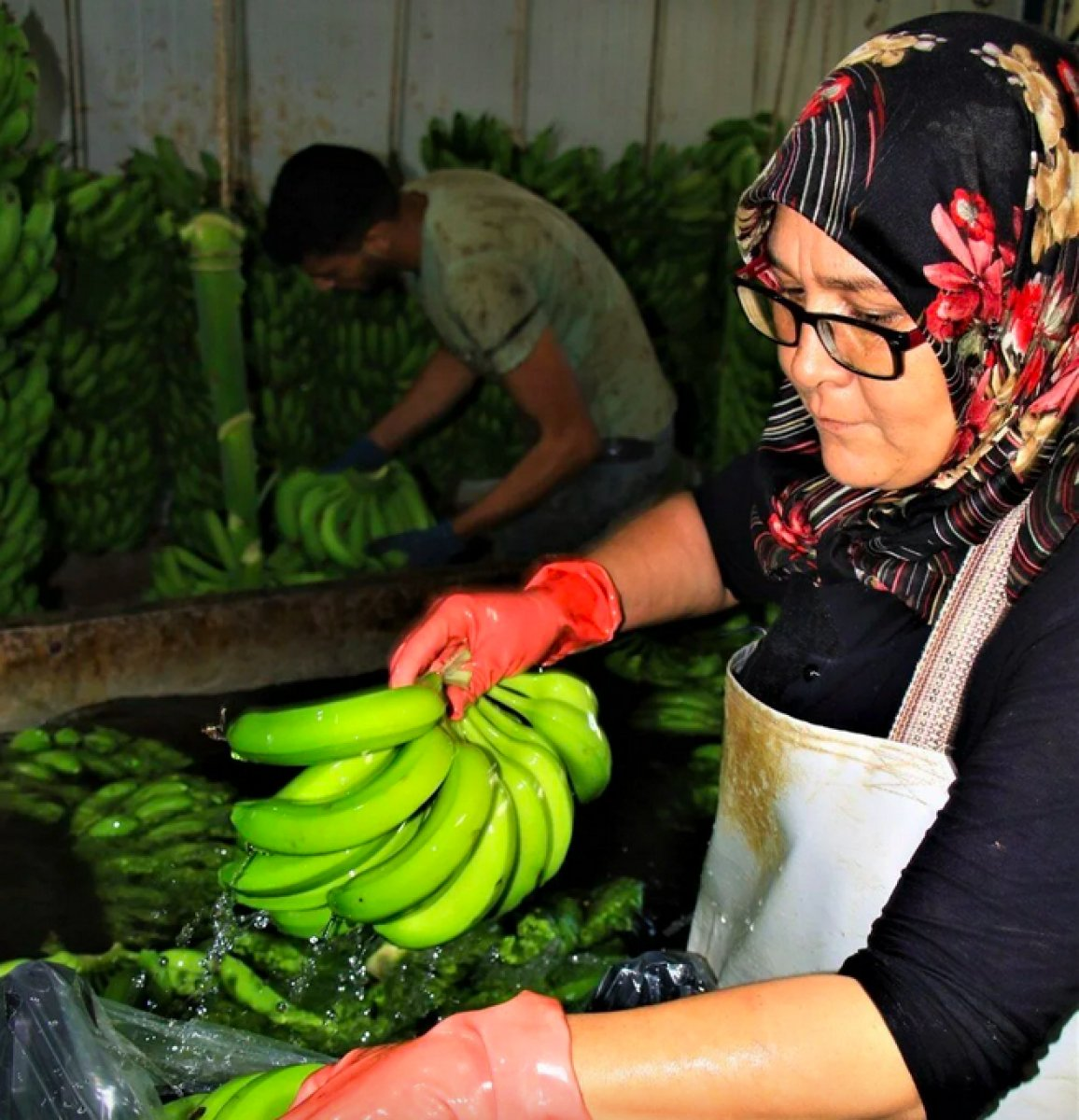 Mersinli muz üreticileri marketlerdeki fiyatlara tepkili #4
