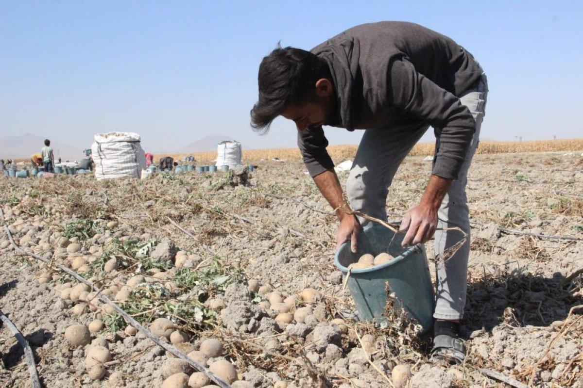 Karaman da çiftçiler patates hasadına kova atma töreni ile başladı #8