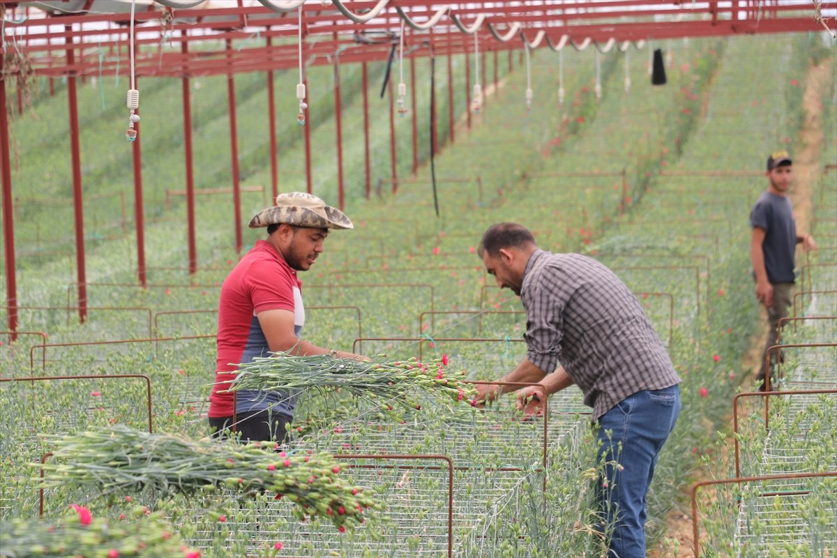 Tarımsal desteklerde vergi iadesiyle 2 milyon çiftçiye 5 milyar lira ödenecek #3