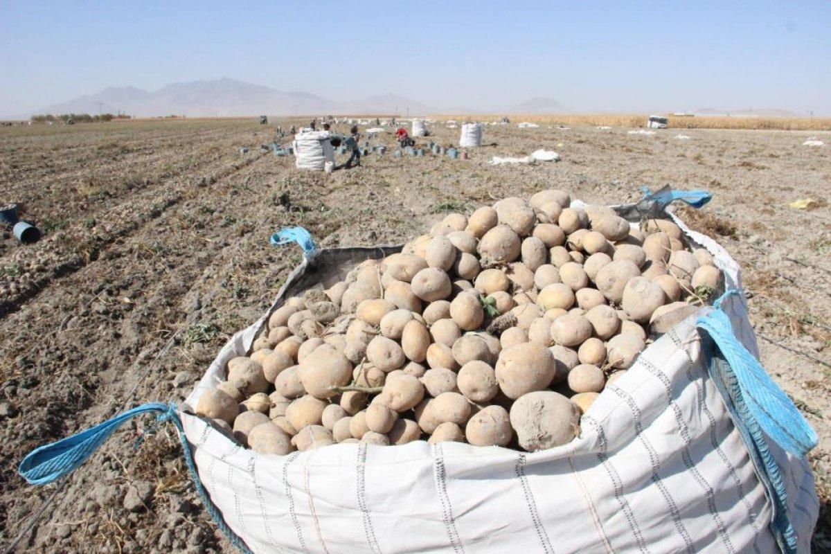 Karaman da çiftçiler patates hasadına kova atma töreni ile başladı #13