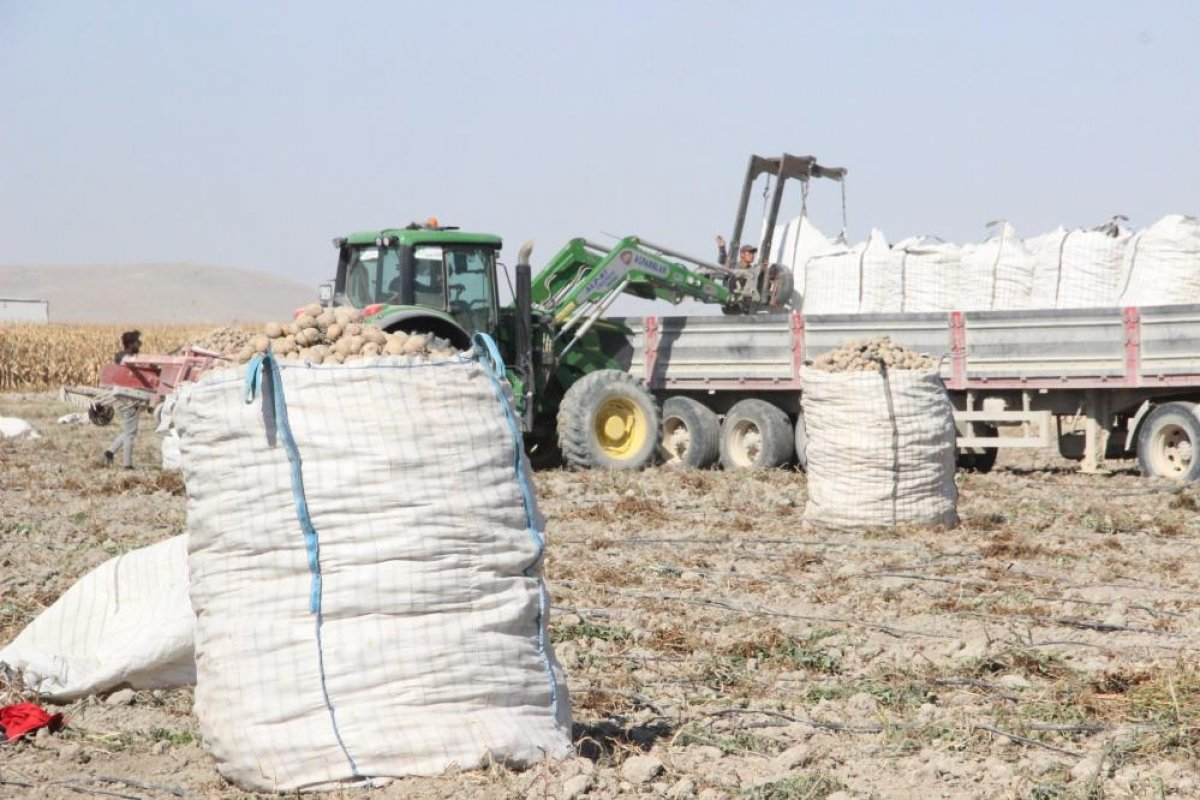 Karaman da çiftçiler patates hasadına kova atma töreni ile başladı #2