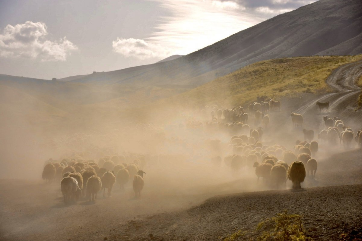 Tarımsal desteklerde vergi iadesiyle 2 milyon çiftçiye 5 milyar lira ödenecek #4