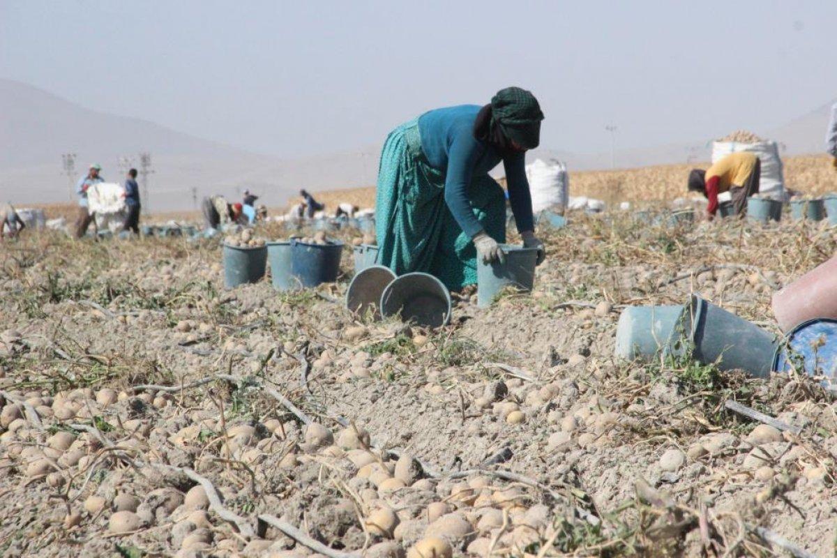 Karaman da çiftçiler patates hasadına kova atma töreni ile başladı #3