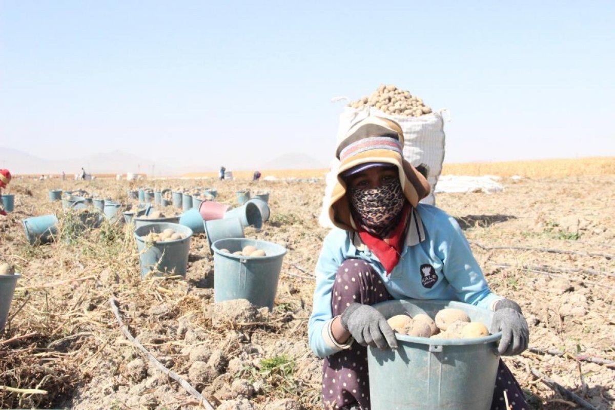 Karaman da çiftçiler patates hasadına kova atma töreni ile başladı #10
