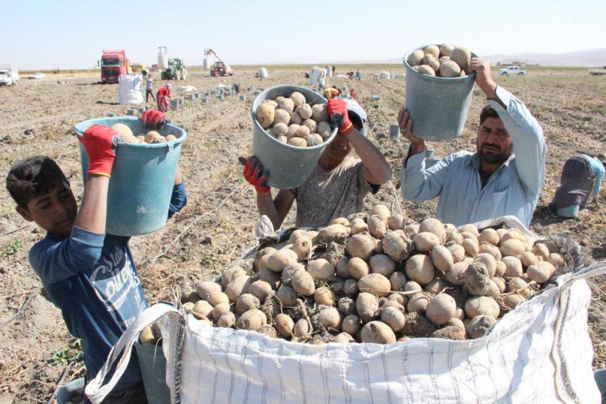 Karaman da çiftçiler patates hasadına kova atma töreni ile başladı #11