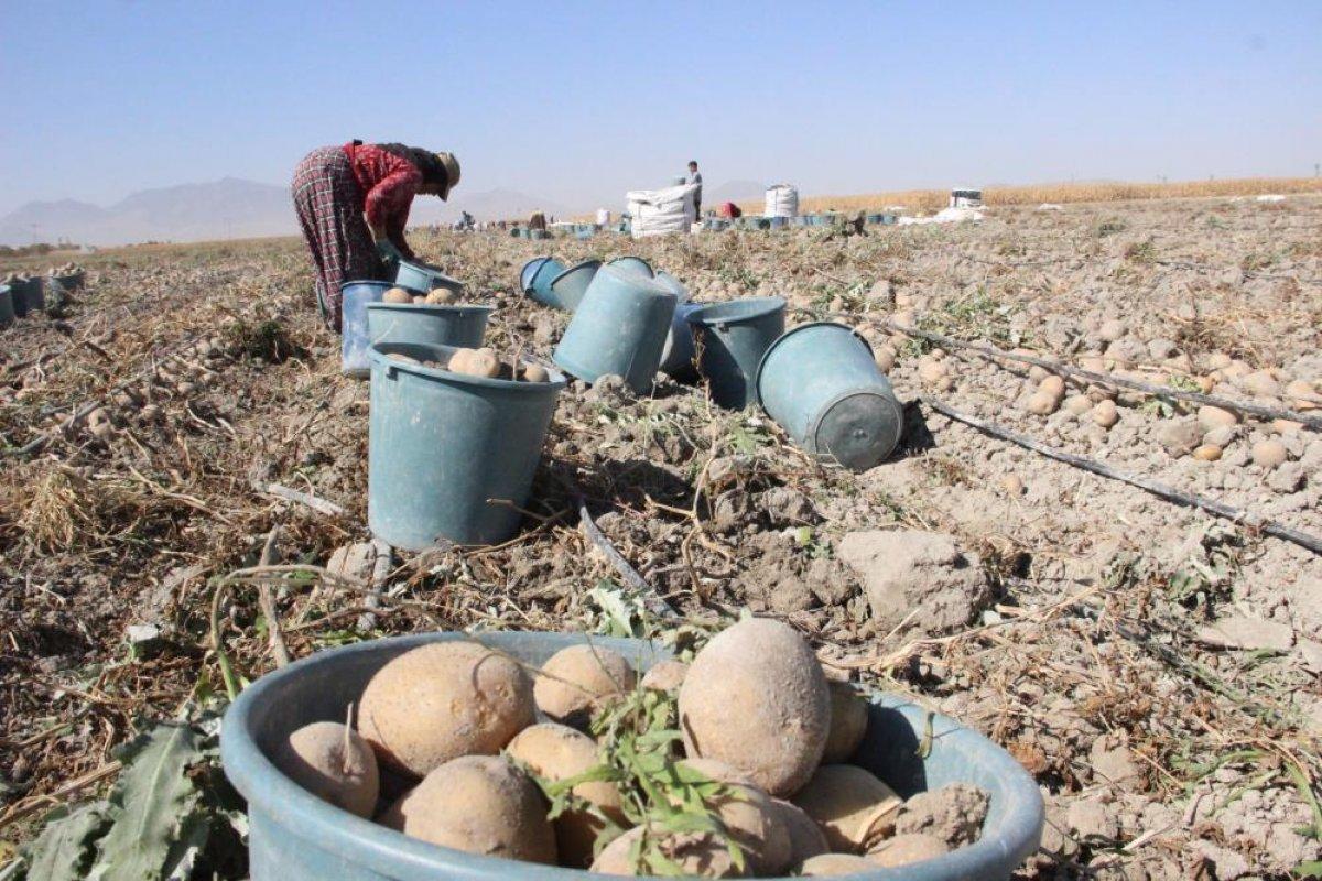 Karaman da çiftçiler patates hasadına kova atma töreni ile başladı #7
