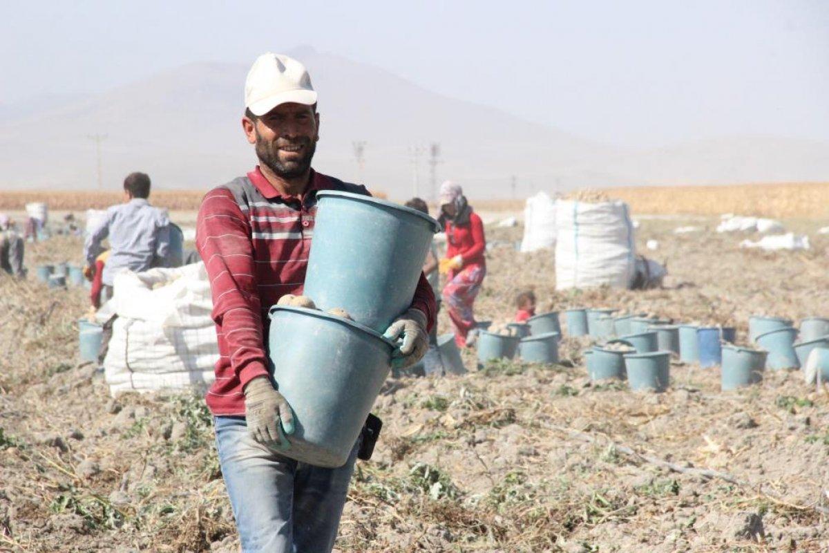 Karaman da çiftçiler patates hasadına kova atma töreni ile başladı #5