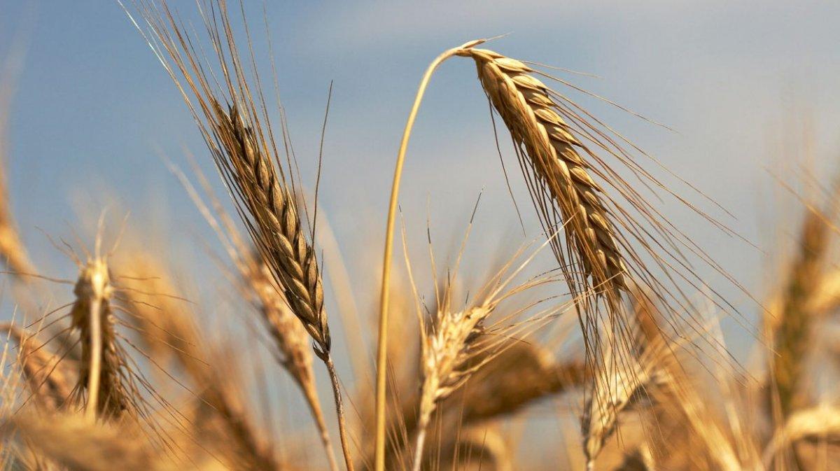 Suya göre tarım çözümü başladı  #2