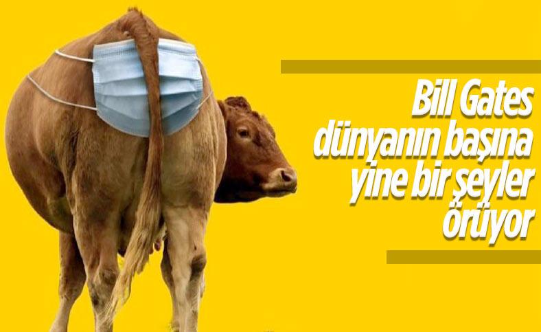 İnekler olmadan gerçek süt ürünleri üretiliyor