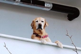 Hacizli köpeğin itiraz dilekçesi işleme alındı