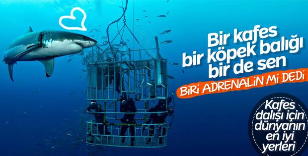 Köpek balığı kafes dalışı için dünyanın en iyi yerleri
