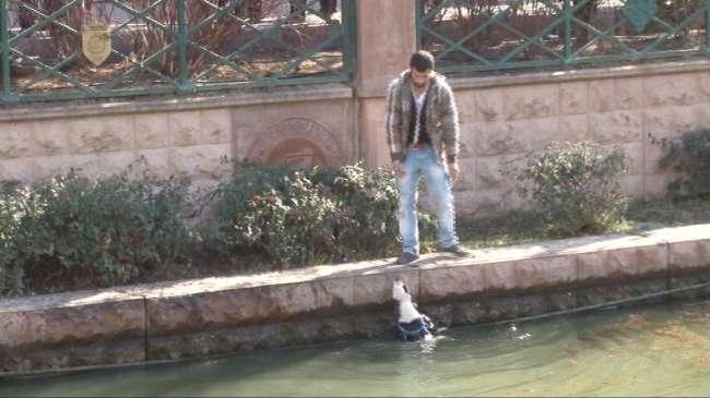 Eskişehir'de kediye işkence protestosunda köpek tepkisi