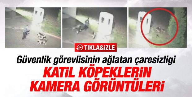Silivri'de güvenlikçinin öldüğü köpek saldırısı kamerada