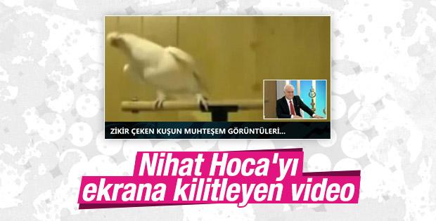 Zikir çeken kuş Nihat Hatipoğlu'nu ekrana kilitledi VİDEO