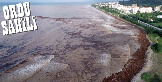 Denize sürüklenen fındıklar havadan görüntülendi