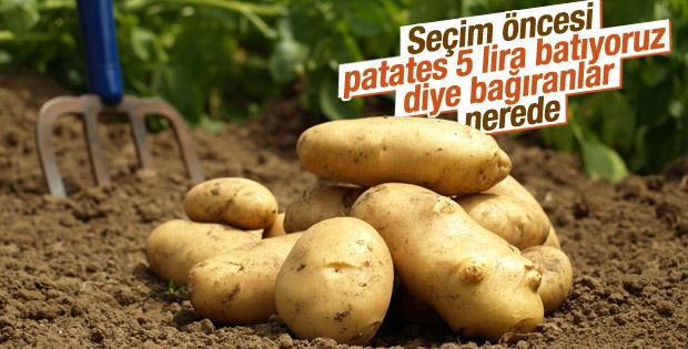 1 ay önce el yakan patatesler şimdi hayvanlara yem oldu