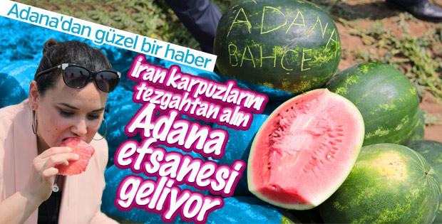 Adana'da turfanda karpuz hasadı başladı