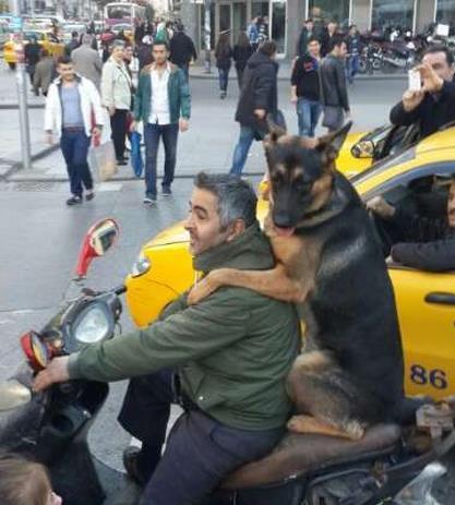 Köpeğin motosiklet keyfi -izle