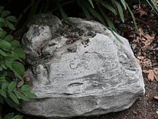 Okulun bahçesinde 12 milyon yaşında fosil bulundu