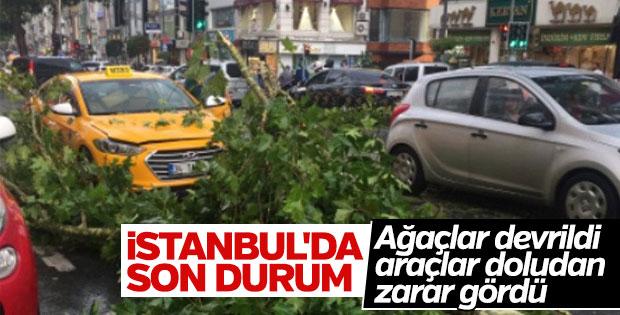 İstanbul'daki yağış ağaçları devirdi