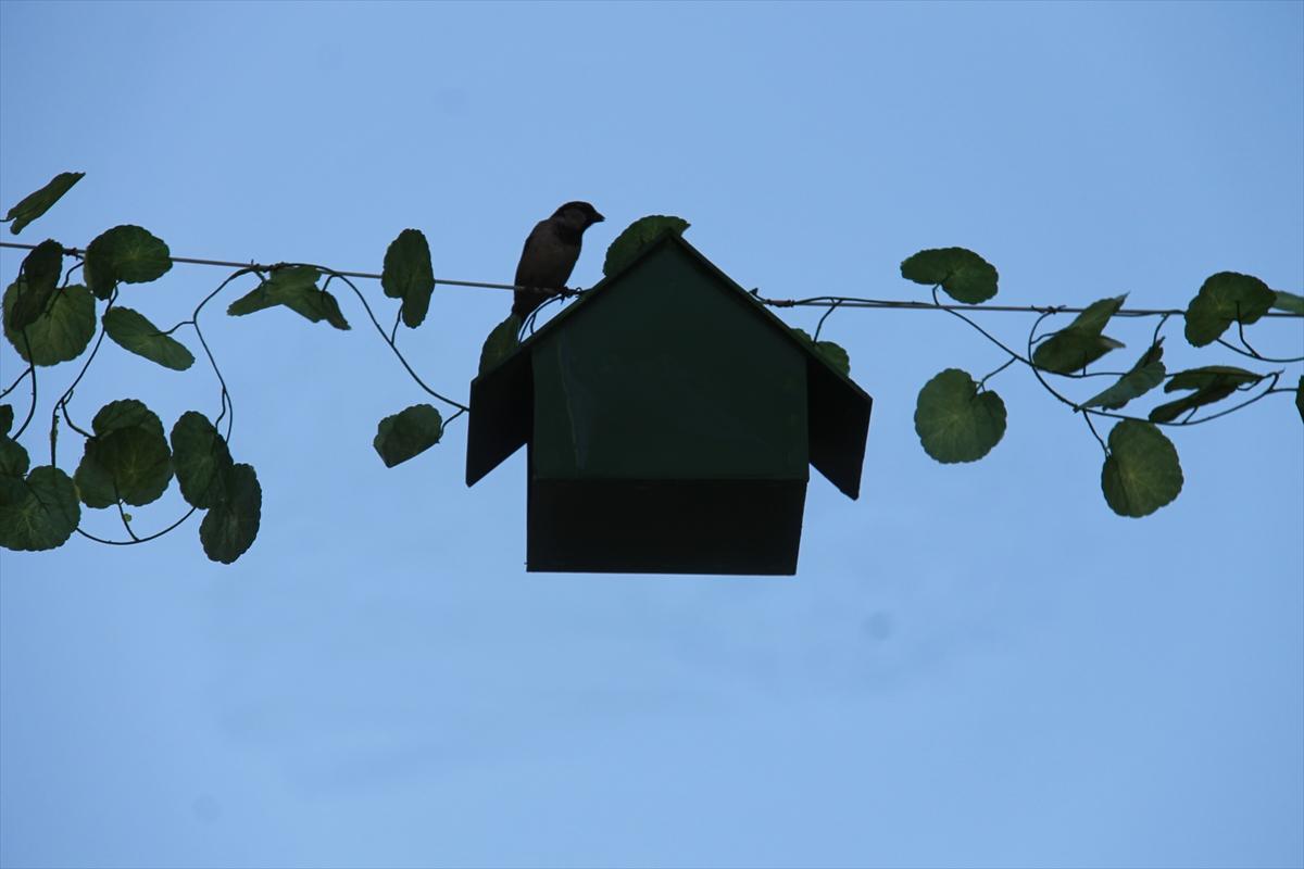 Kuş yuvası sıra dışı: fikirler ve fotoğraflar