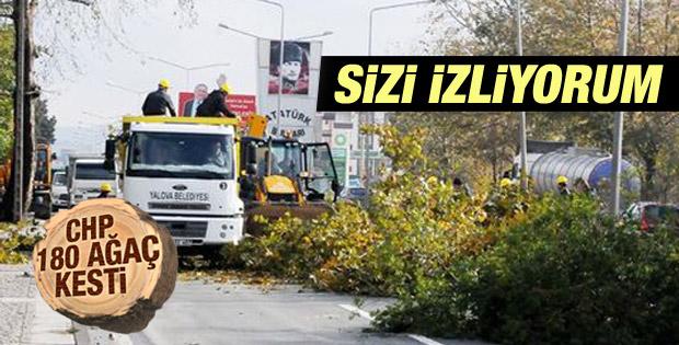 Yalova'da 180 ağaç Atatürk'ün gözleri önünde kesildi