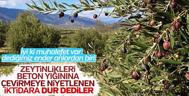 Zeytinlik alanlar zeytinlik olarak kalacak