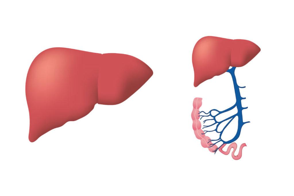 Karaciğer 1 haftada eski kapasitesine dönebiliyor #2