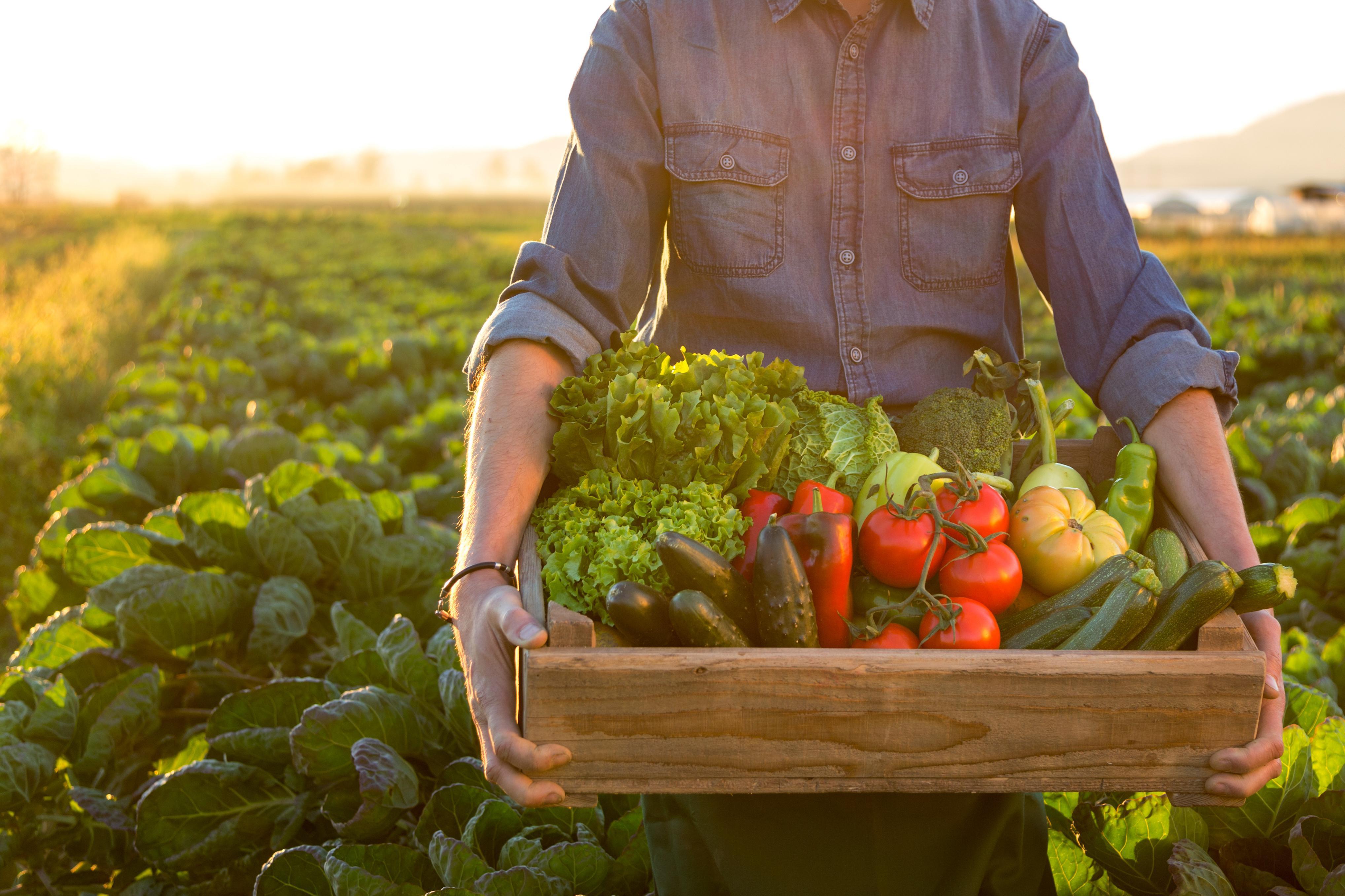 Mevsimine uygun olmayan beslenme tarzı tehlike saçıyor #2