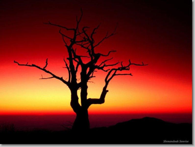 En güzel çekilmiş ödüllü manzara resimleri - 24. resim