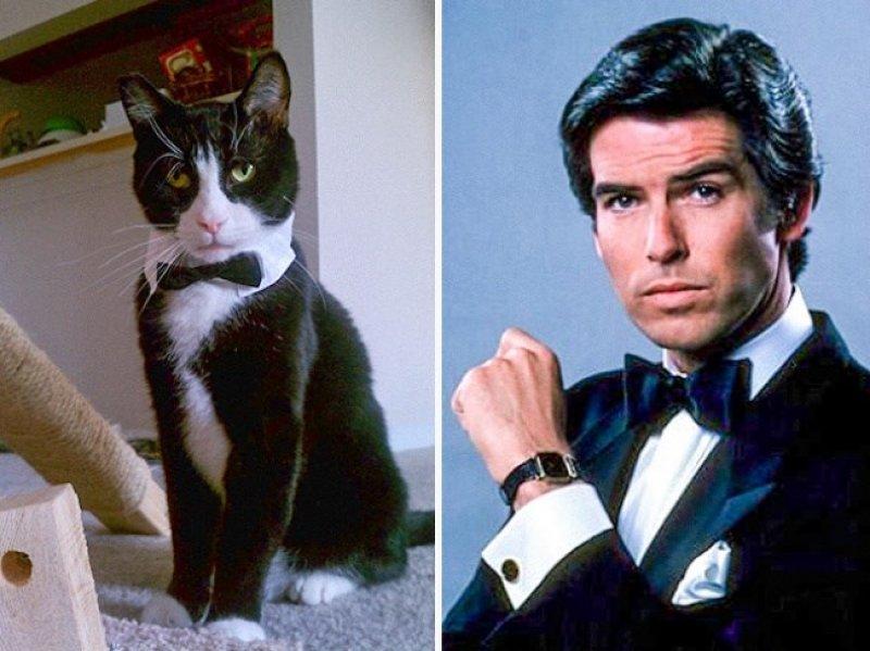 Kediler Ve Film Karakterleri Arasındaki Komik Benzerlik