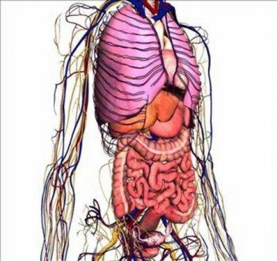 Organlarimiz Ne Kadar Surede Kendini Yeniler